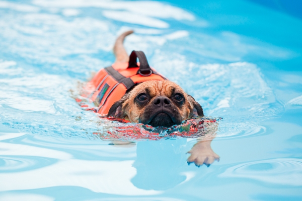 Aquatherapy for dogs!